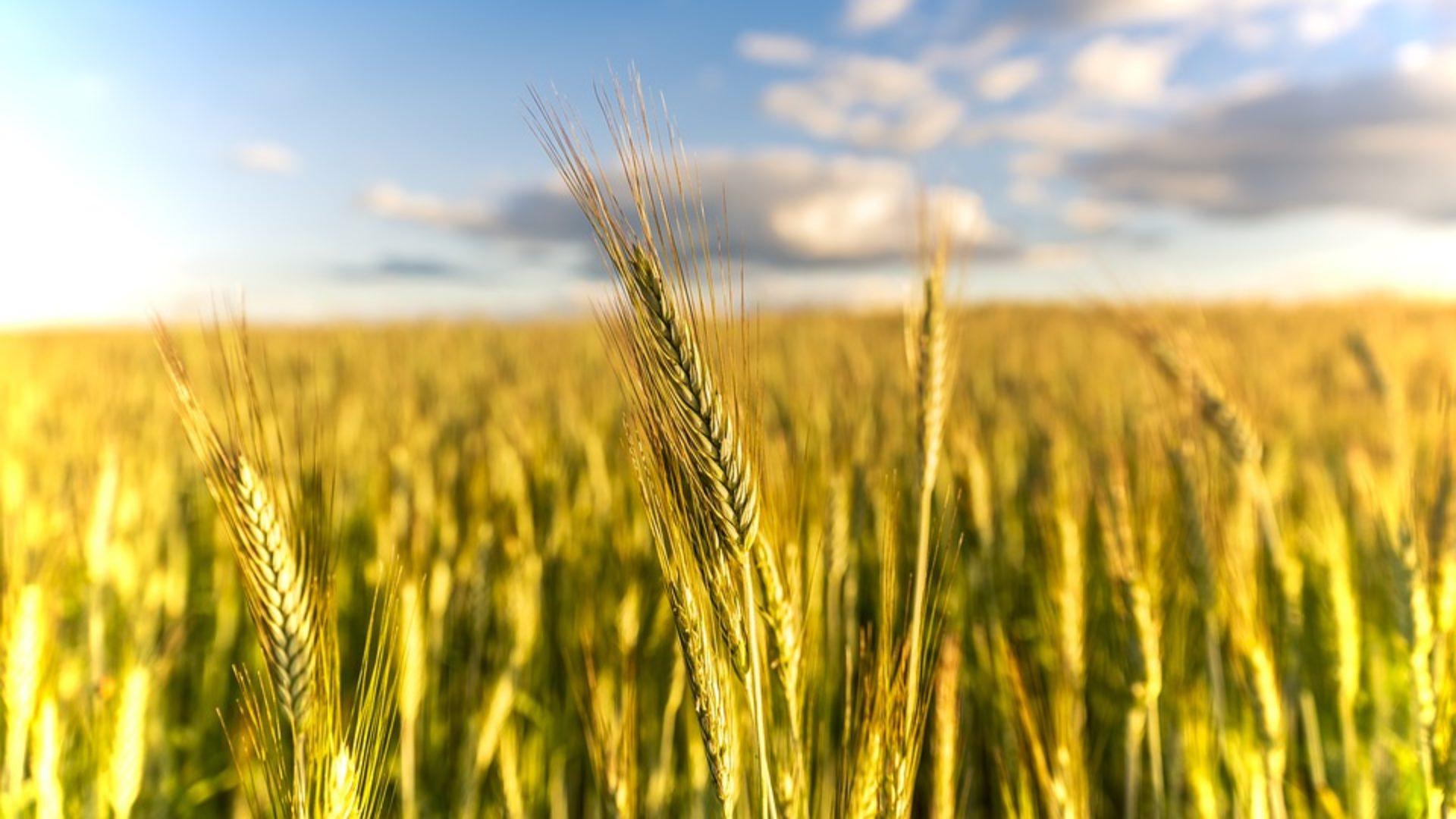 AGRI-BRAIN